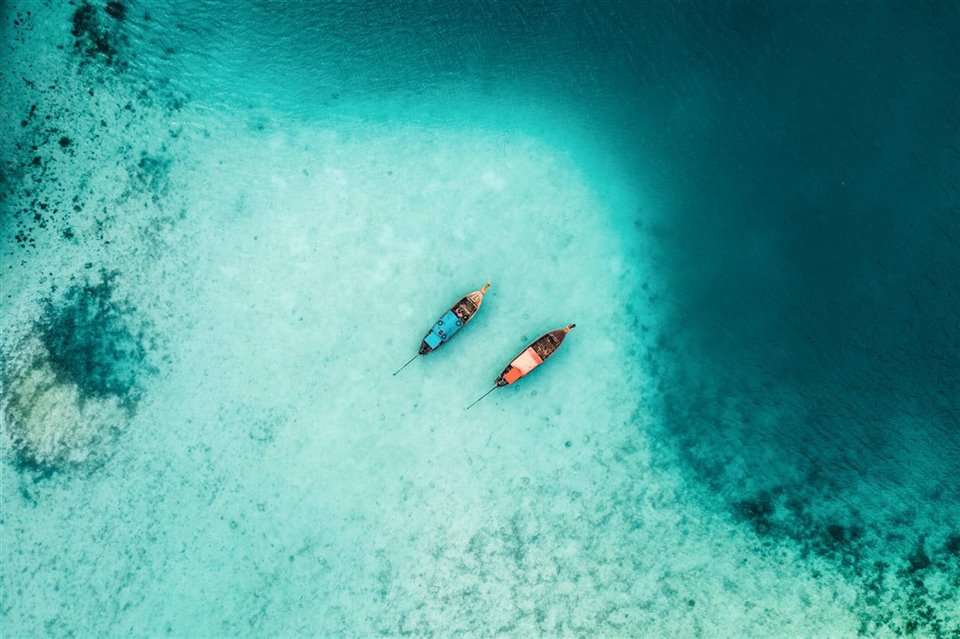 Fitopláncton océanos