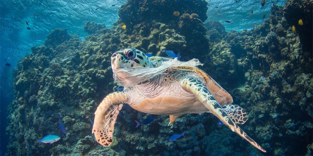 Salvar océanos